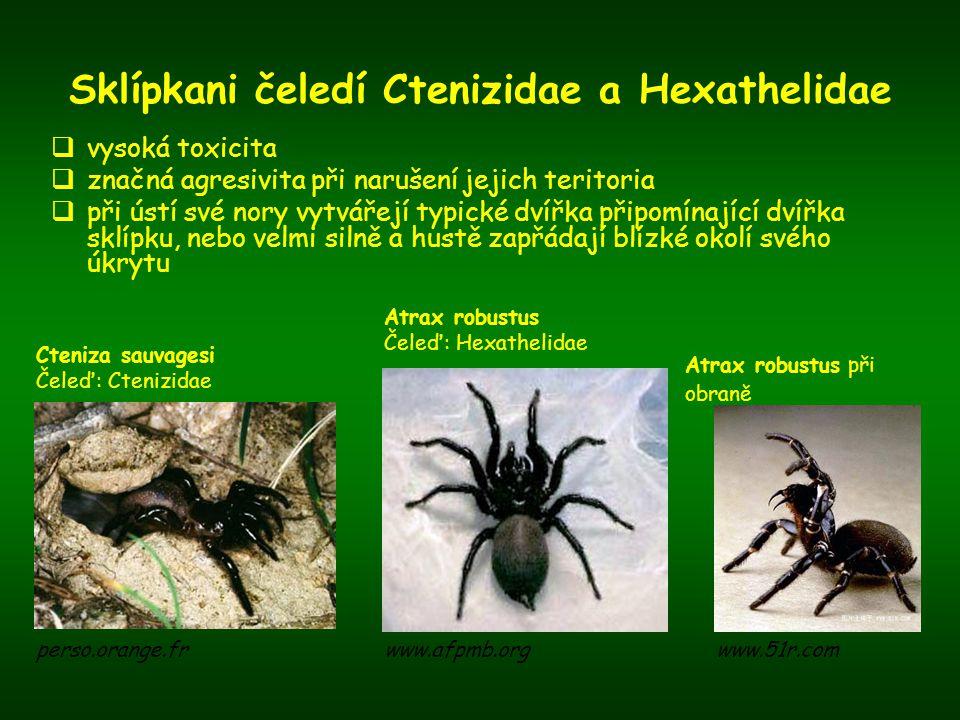 Sklípkani čeledí Ctenizidae a Hexathelidae