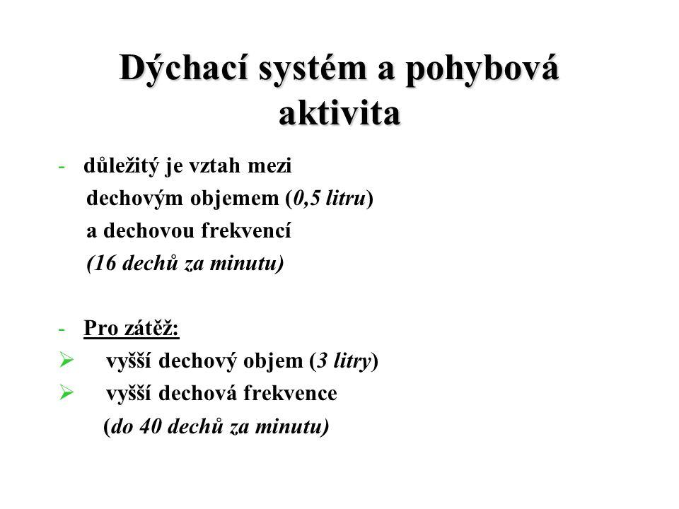 Dýchací systém a pohybová aktivita