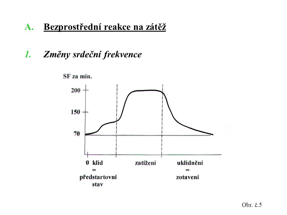 Bezprostřední reakce na zátěž Změny srdeční frekvence