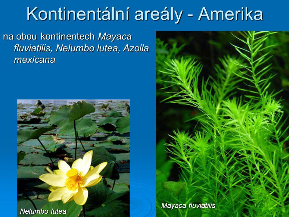 Kontinentální areály - Amerika