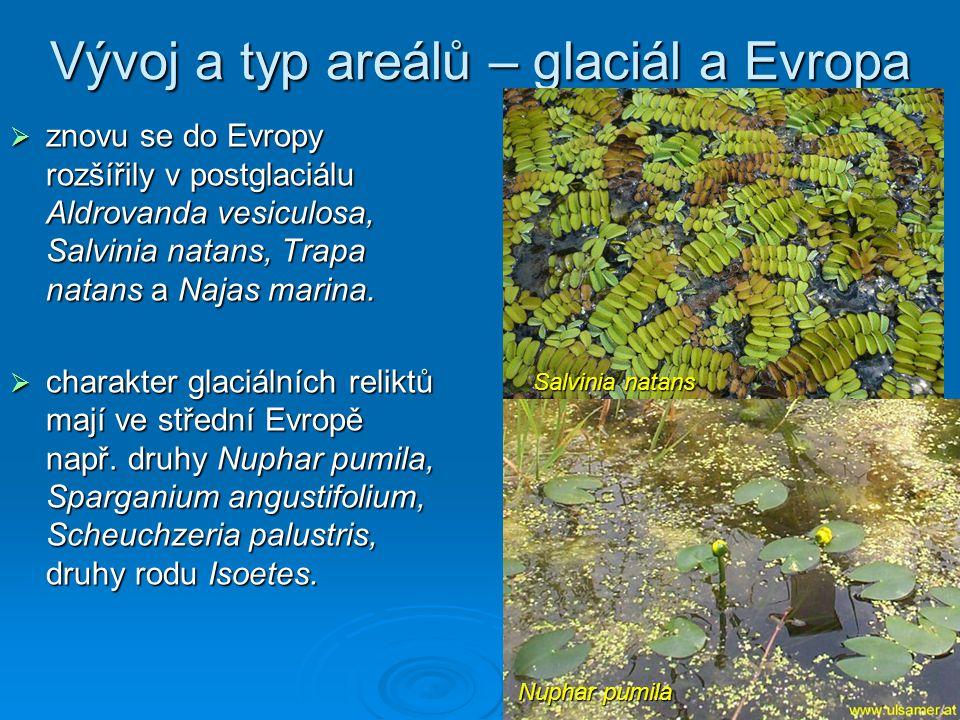 Vývoj a typ areálů – glaciál a Evropa