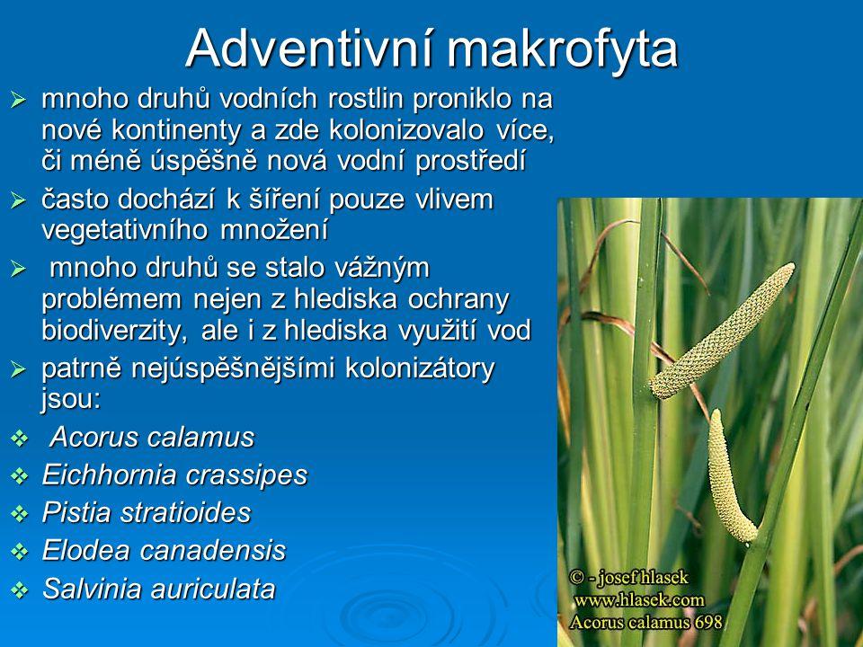 Adventivní makrofyta mnoho druhů vodních rostlin proniklo na nové kontinenty a zde kolonizovalo více, či méně úspěšně nová vodní prostředí.