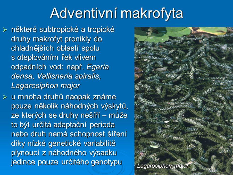 Adventivní makrofyta