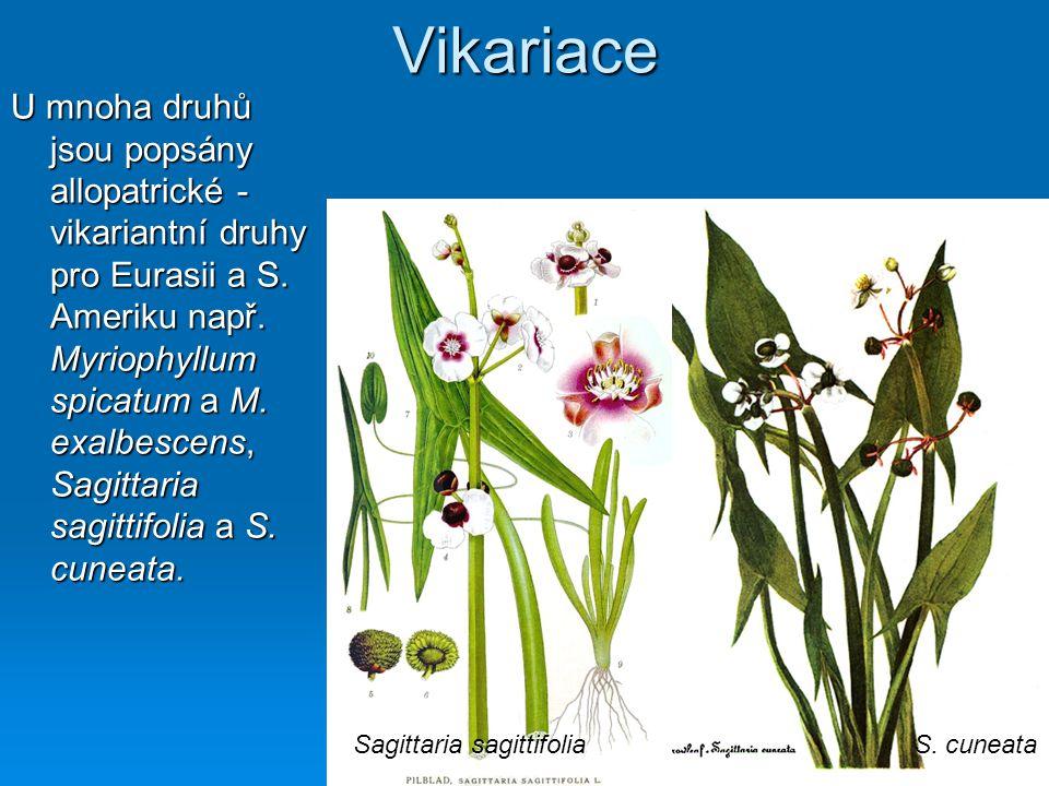 Vikariace