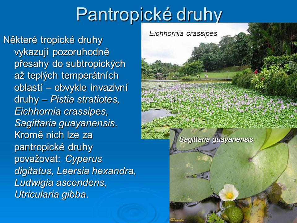 Pantropické druhy Eichhornia crassipes.