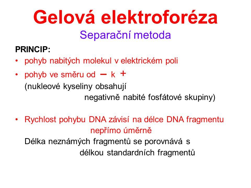 Gelová elektroforéza Separační metoda
