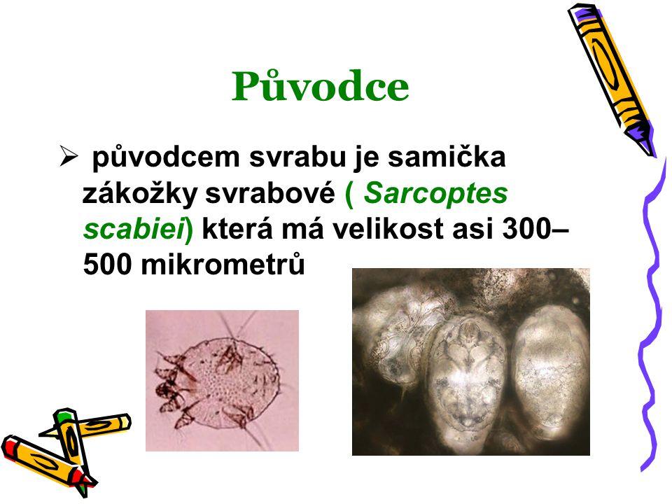Původce původcem svrabu je samička zákožky svrabové ( Sarcoptes scabiei) která má velikost asi 300–500 mikrometrů.