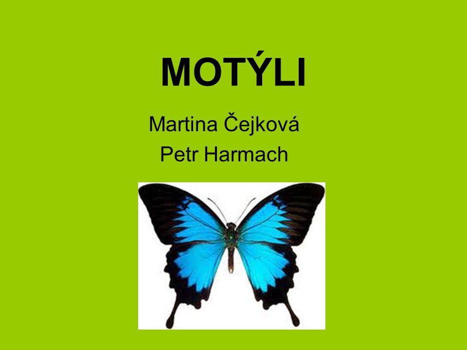 Martina Čejková Petr Harmach