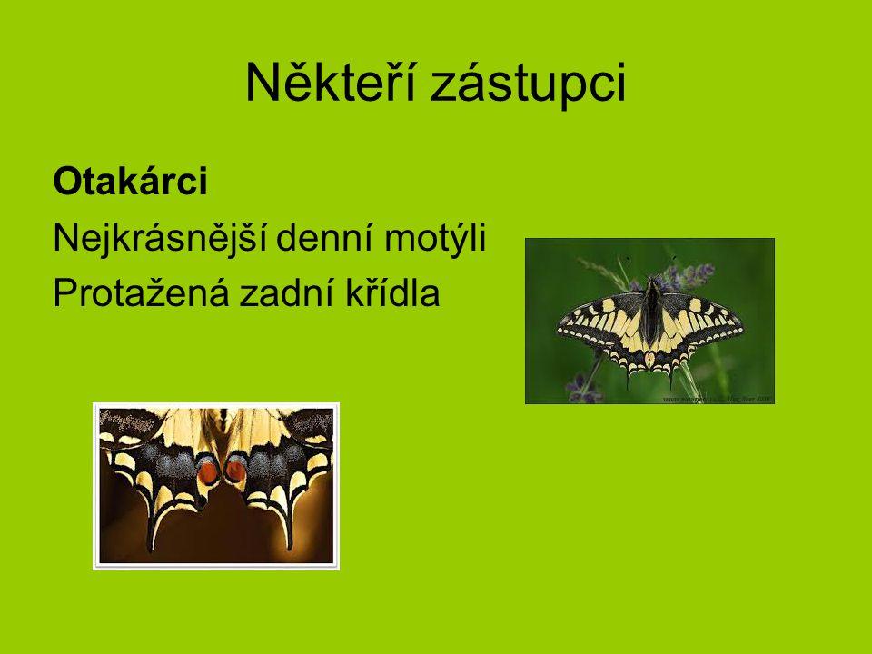 Někteří zástupci Otakárci Nejkrásnější denní motýli