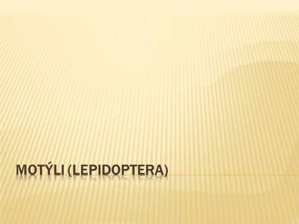 Motýli (Lepidoptera)