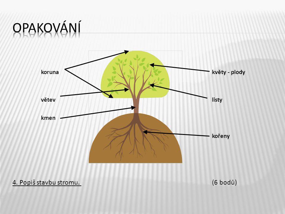 opakování 4. Popiš stavbu stromu. (6 bodů) koruna květy - plody