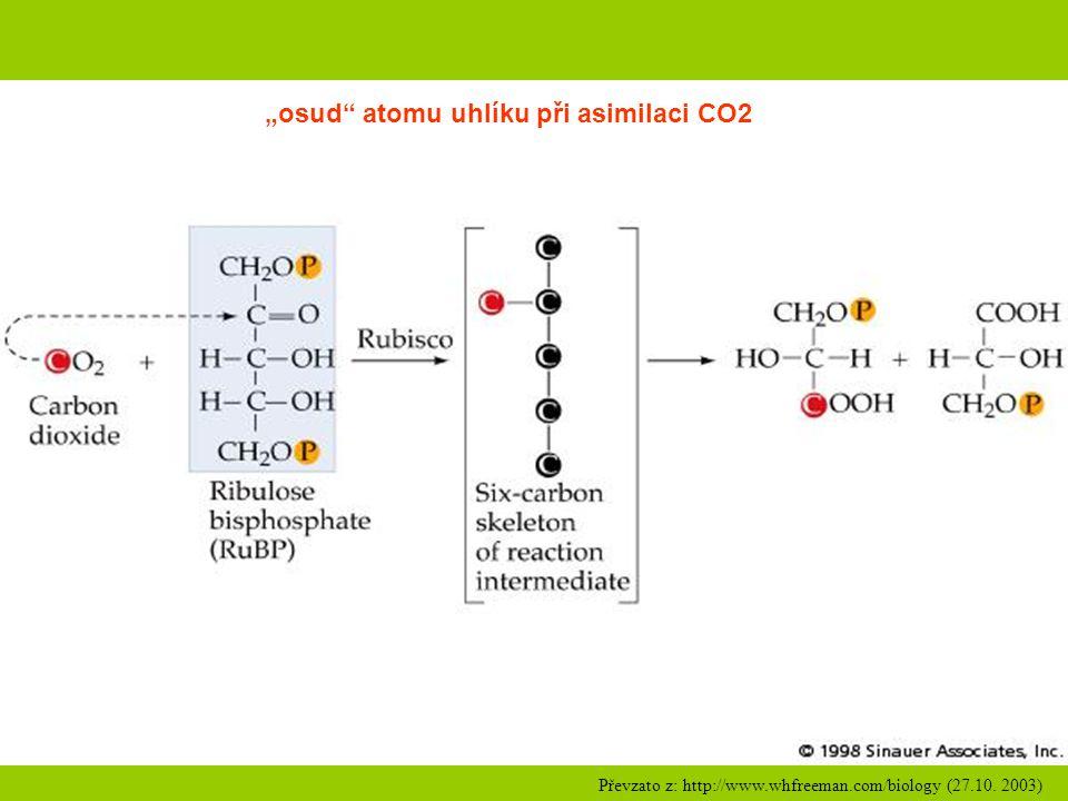 """""""osud atomu uhlíku při asimilaci CO2"""