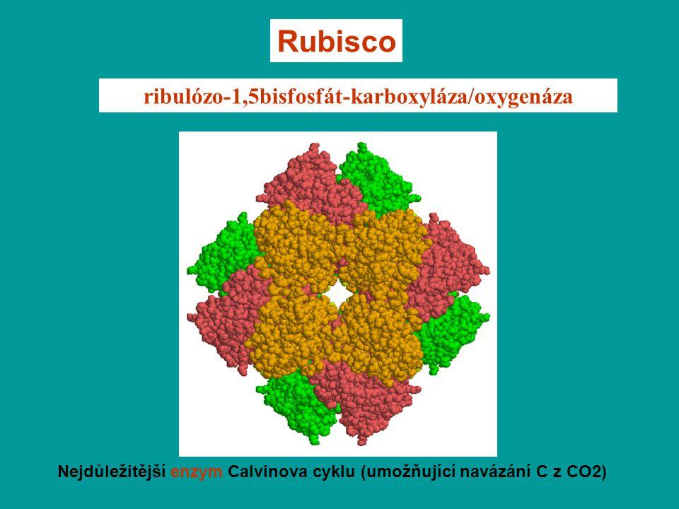 ribulózo-1,5bisfosfát-karboxyláza/oxygenáza