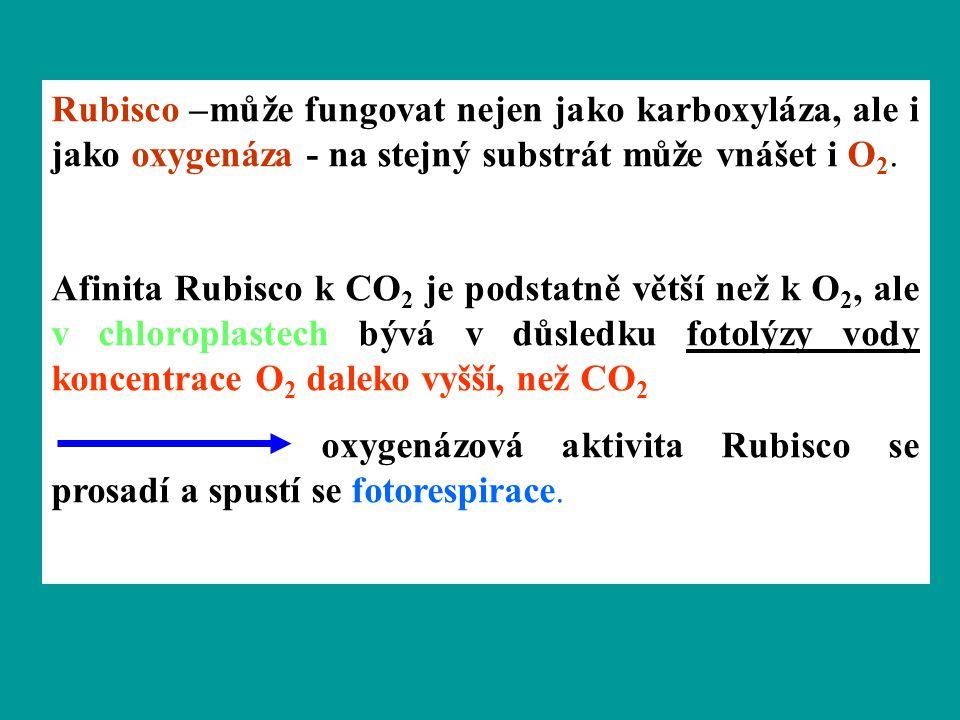 Rubisco –může fungovat nejen jako karboxyláza, ale i jako oxygenáza - na stejný substrát může vnášet i O2.