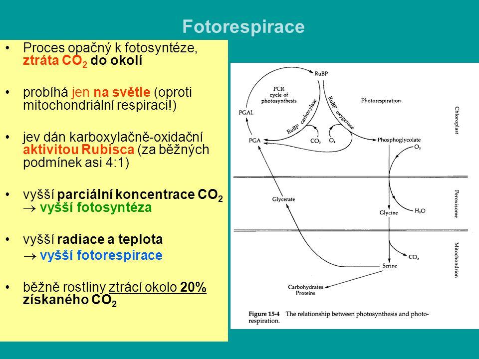 Fotorespirace Proces opačný k fotosyntéze, ztráta CO2 do okolí