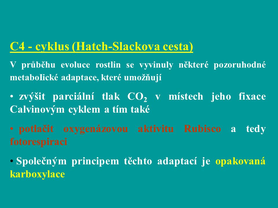 C4 - cyklus (Hatch-Slackova cesta)