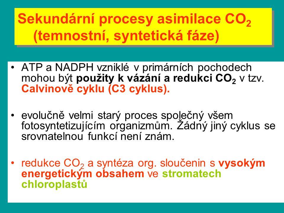 Sekundární procesy asimilace CO2 (temnostní, syntetická fáze)