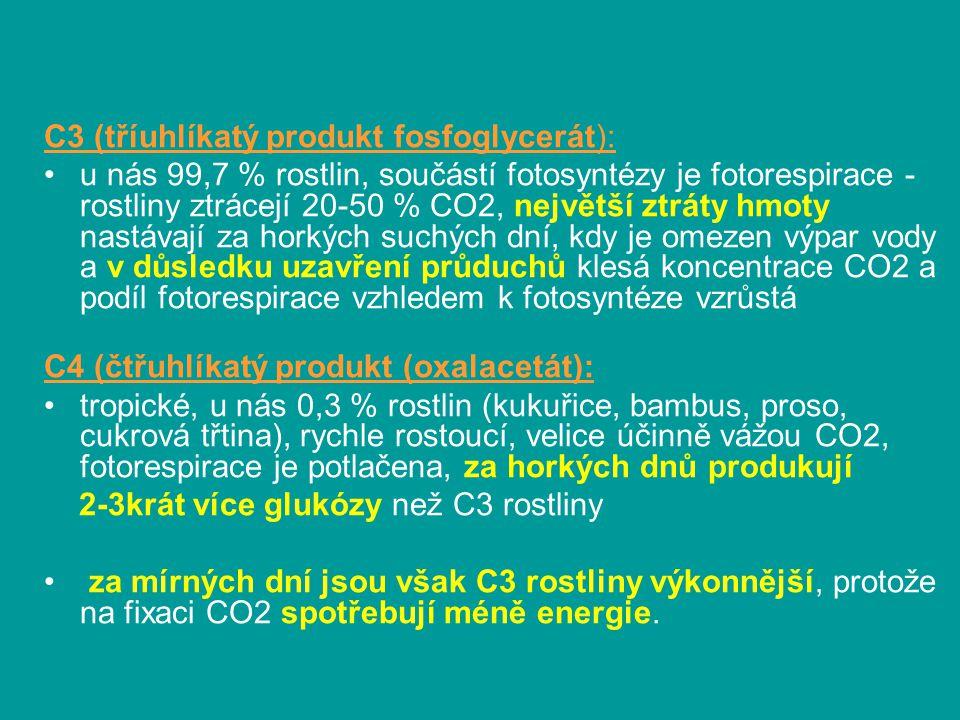 C3 (tříuhlíkatý produkt fosfoglycerát):