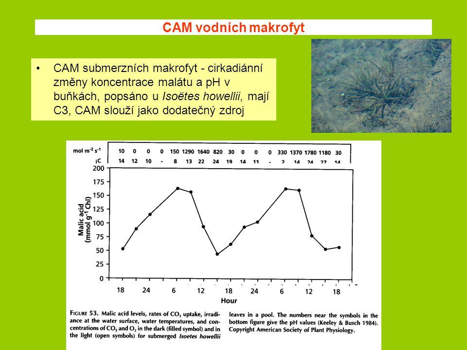 CAM vodních makrofyt