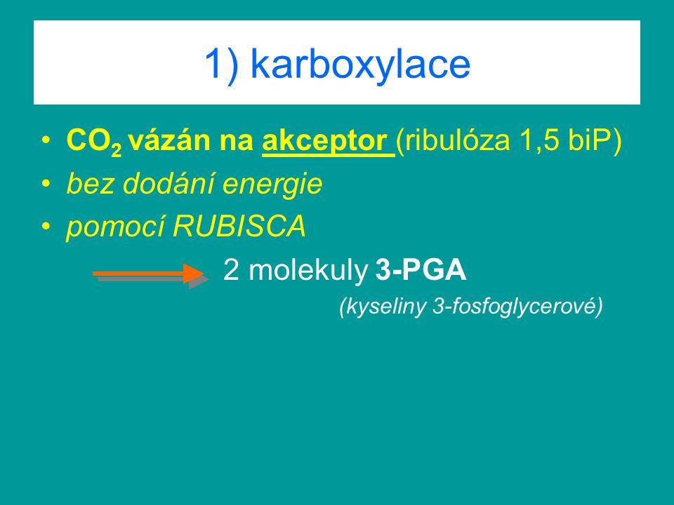 1) karboxylace CO2 vázán na akceptor (ribulóza 1,5 biP)