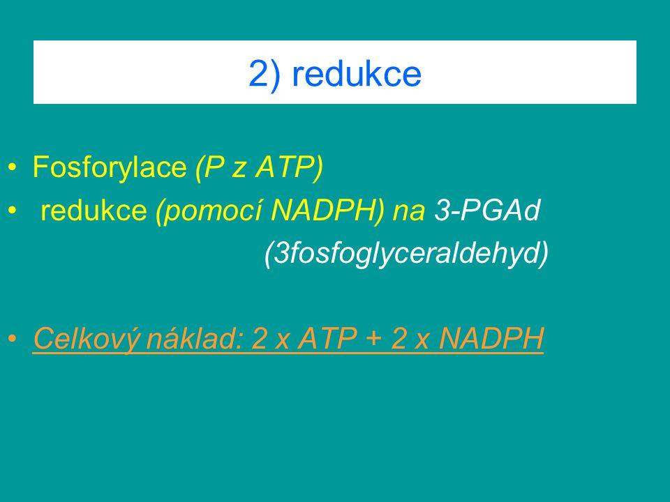 2) redukce Fosforylace (P z ATP) redukce (pomocí NADPH) na 3-PGAd