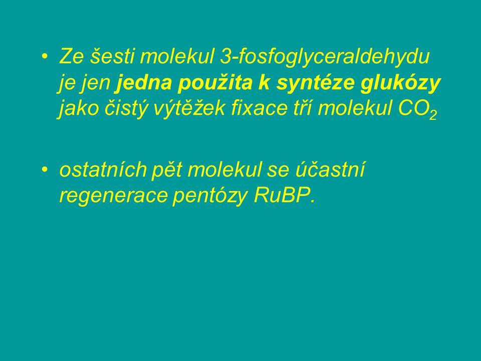 Ze šesti molekul 3-fosfoglyceraldehydu je jen jedna použita k syntéze glukózy jako čistý výtěžek fixace tří molekul CO2