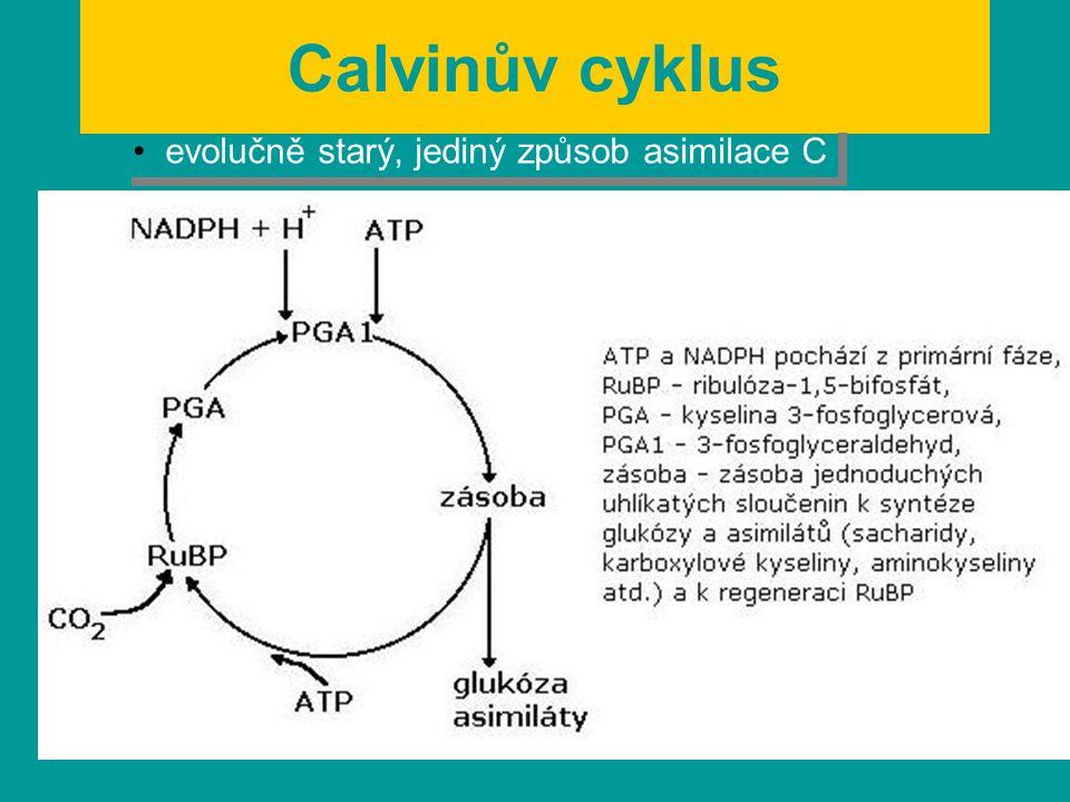 Calvinův cyklus evolučně starý, jediný způsob asimilace C