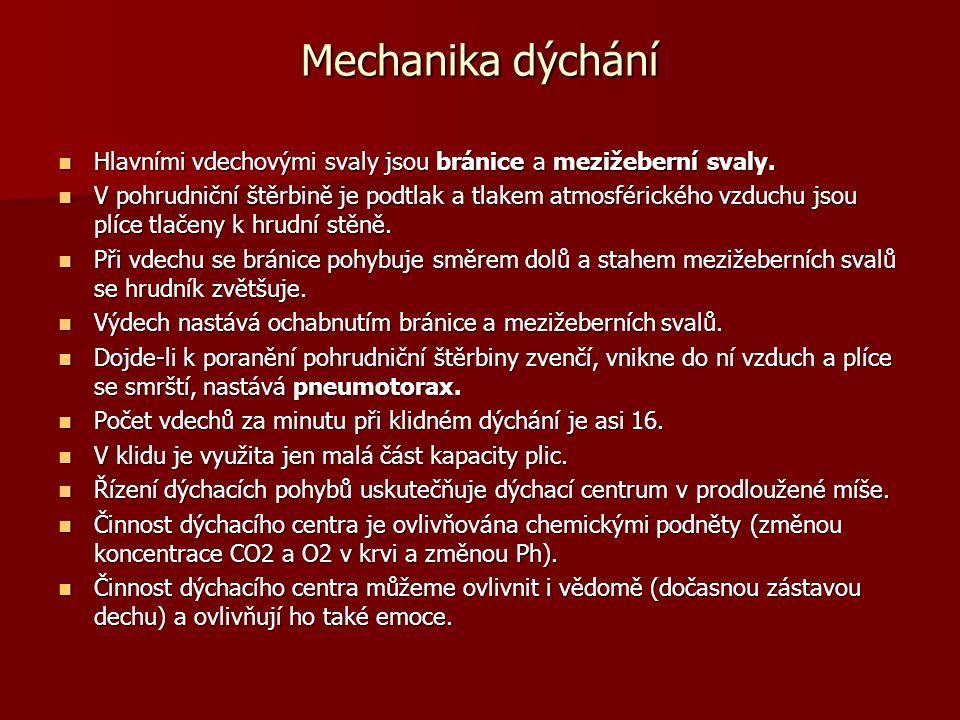Mechanika dýchání Hlavními vdechovými svaly jsou bránice a mezižeberní svaly.