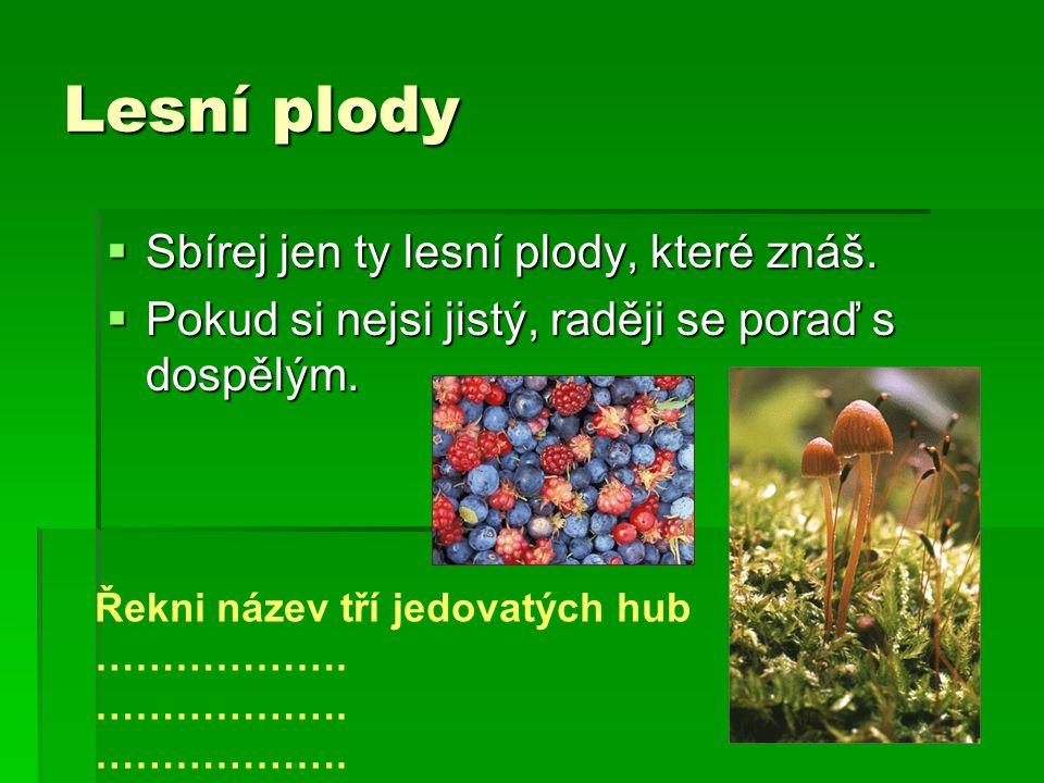 Lesní plody Sbírej jen ty lesní plody, které znáš.