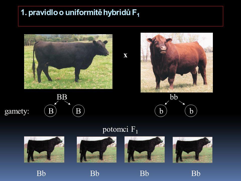 1. pravidlo o uniformitě hybridů F1
