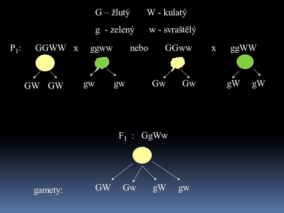 G – žlutý W - kulatý g - zelený w - svraštělý. P1: GGWW x ggww nebo GGww x ggWW.