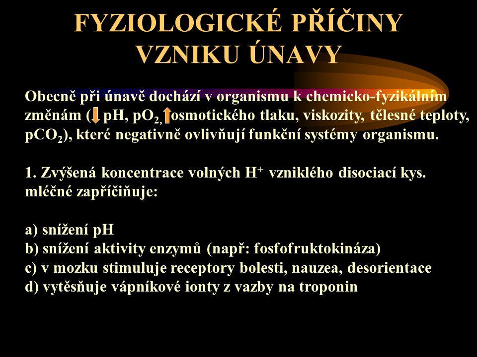 FYZIOLOGICKÉ PŘÍČINY VZNIKU ÚNAVY
