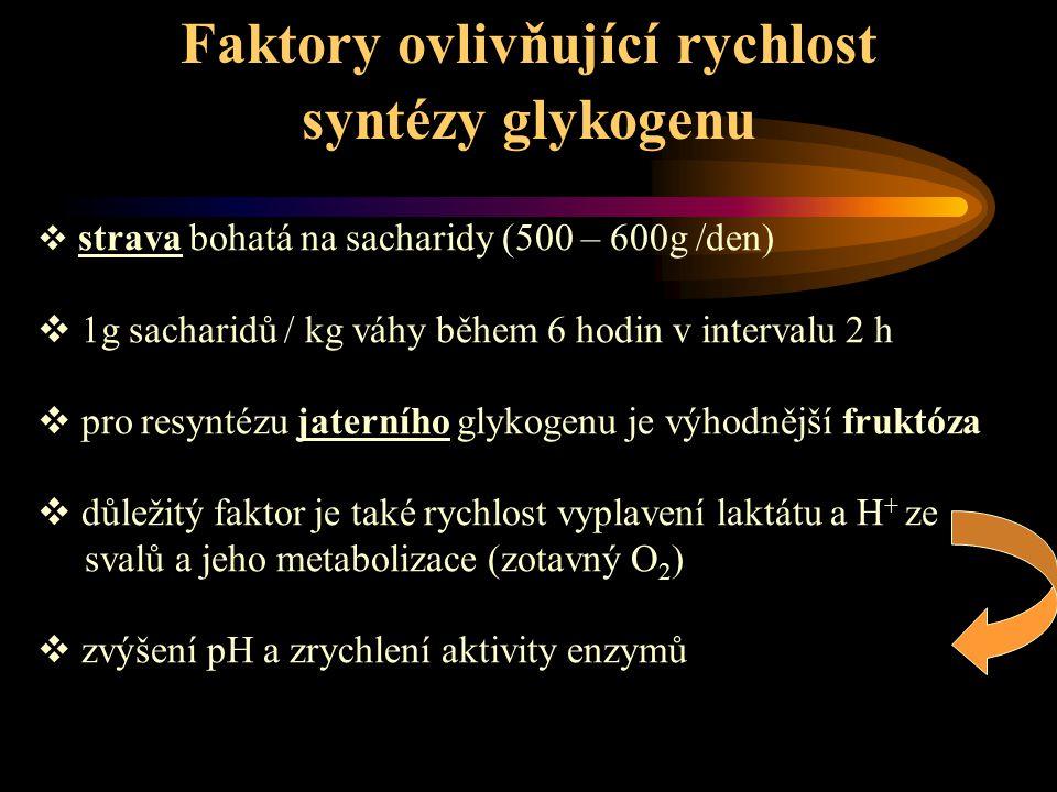 Faktory ovlivňující rychlost syntézy glykogenu