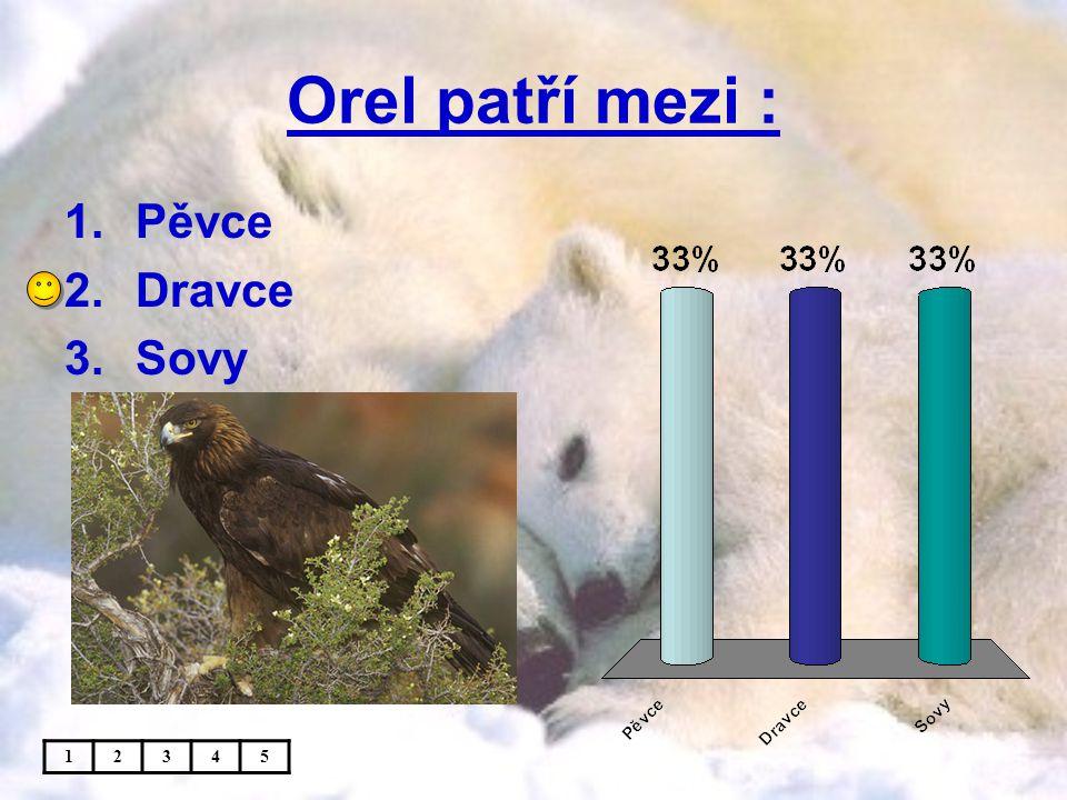 Orel patří mezi : Pěvce Dravce Sovy 1 2 3 4 5