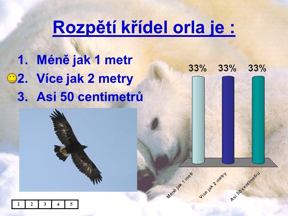 Rozpětí křídel orla je :