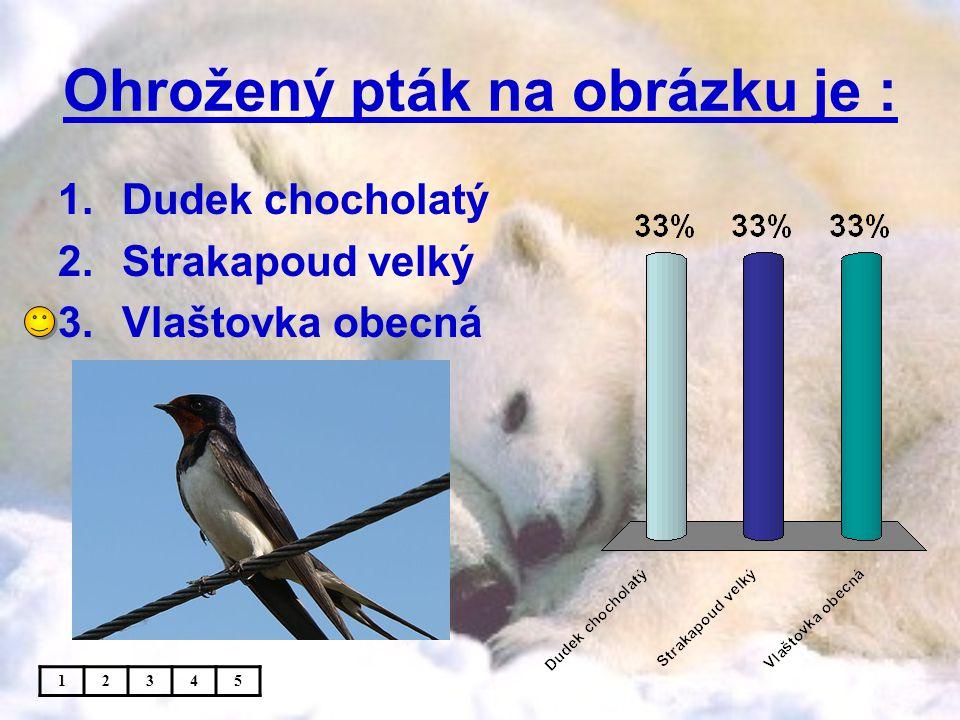 Ohrožený pták na obrázku je :