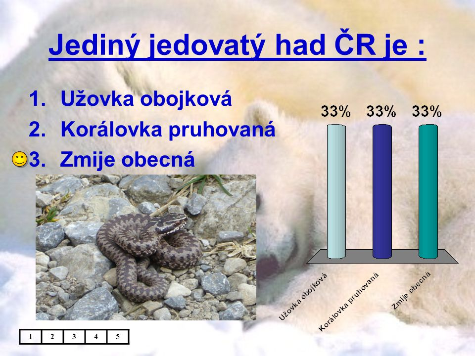 Jediný jedovatý had ČR je :