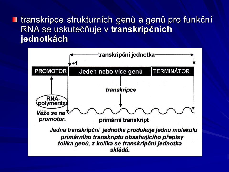 transkripce strukturních genů a genů pro funkční RNA se uskutečňuje v transkripčních jednotkách
