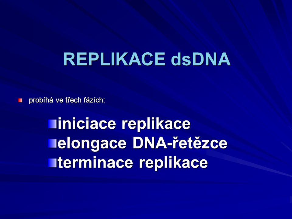 REPLIKACE dsDNA iniciace replikace elongace DNA-řetězce