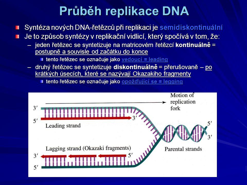 Průběh replikace DNA Syntéza nových DNA-řetězců při replikaci je semidiskontinuální.