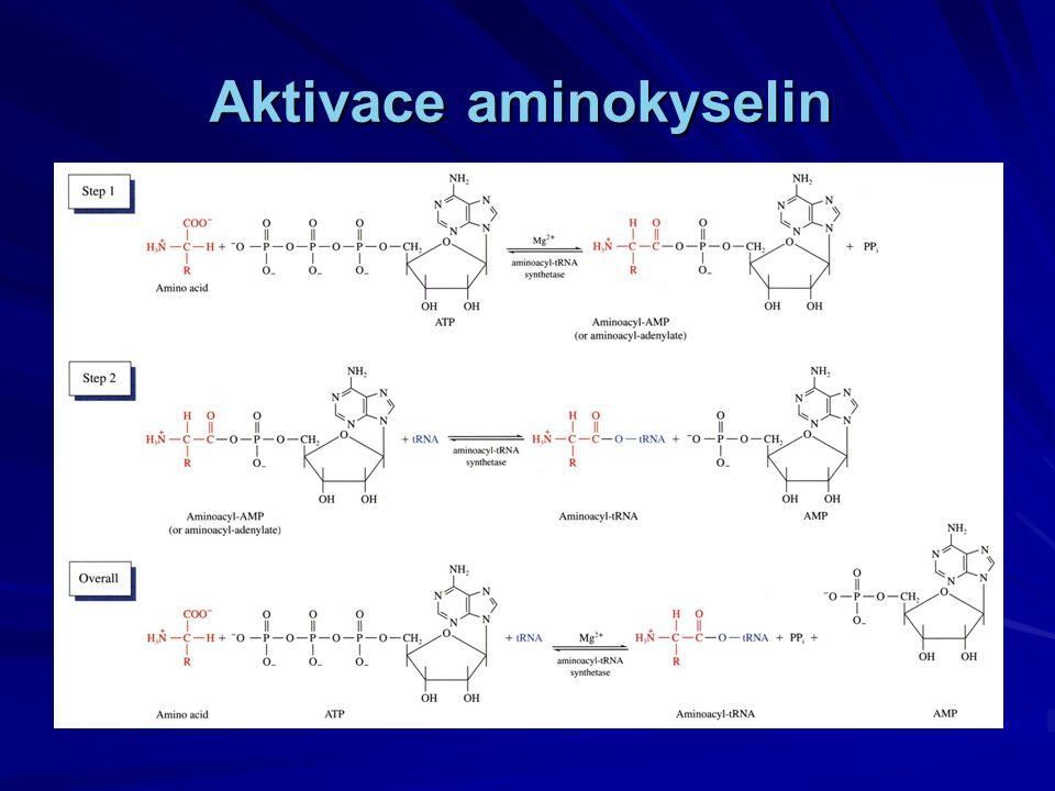 Aktivace aminokyselin