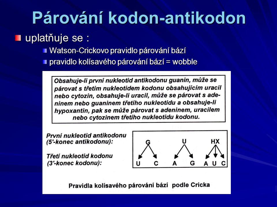 Párování kodon-antikodon