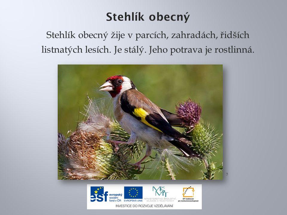 Stehlík obecný Stehlík obecný žije v parcích, zahradách, řidších listnatých lesích. Je stálý. Jeho potrava je rostlinná.