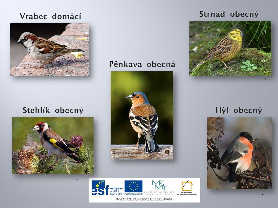 Strnad obecný Vrabec domácí Pěnkava obecná Stehlík obecný Hýl obecný