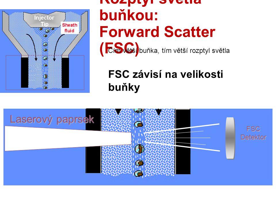 Rozptyl světla buňkou: Forward Scatter (FSC)