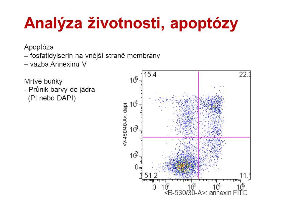 Analýza životnosti, apoptózy