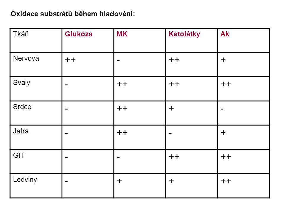 ++ - + Oxidace substrátů během hladovění: Tkáň Glukóza MK Ketolátky Ak