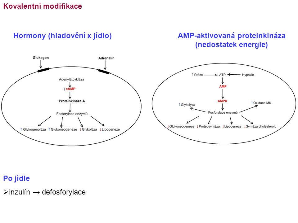 AMP-aktivovaná proteinkináza (nedostatek energie)