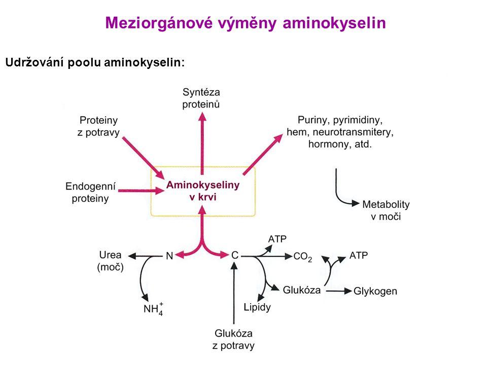 Meziorgánové výměny aminokyselin