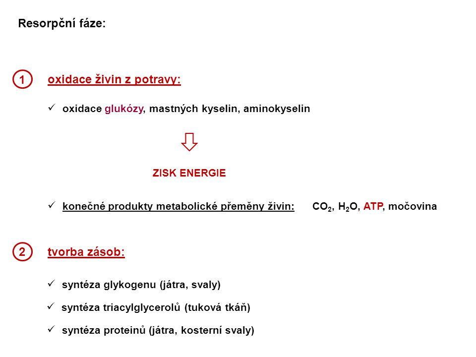 oxidace živin z potravy: